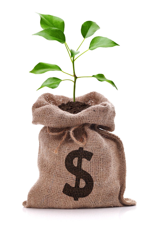 college money tree