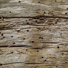 ADHN Traitement bois nantes vannes Loire
