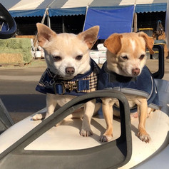 Rikki Bobbi and Chappy. Mascots of South Shore Farms