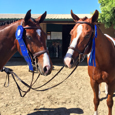 Bleu and Proenza both winning in their first show in America in the 3' green hunter at Del Mar National
