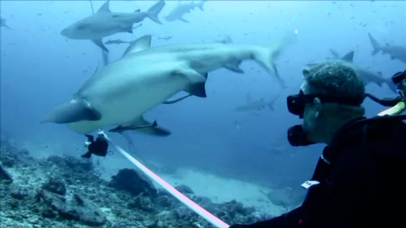 Hugh Fairs and Sharks