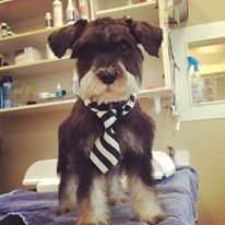 Other Grooming Services