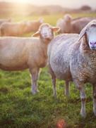 Shepherding with Integrity