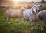 Shepherding with Integrity