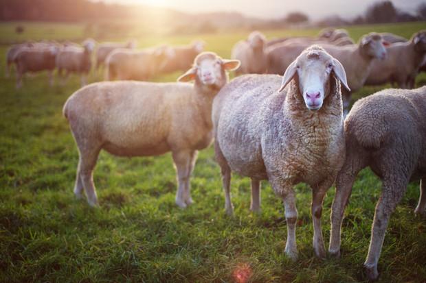 National Farm Animals Day