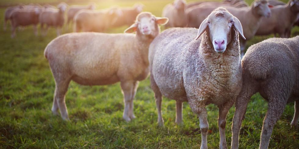 Animali, ignari trasportatori di semi (1)