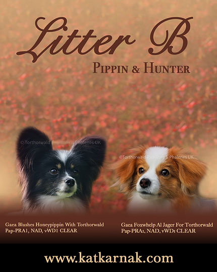 Litter B Pippin and Hunter