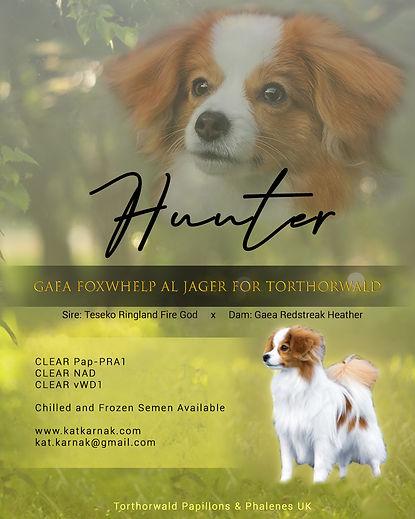 Hunter Stud Dog