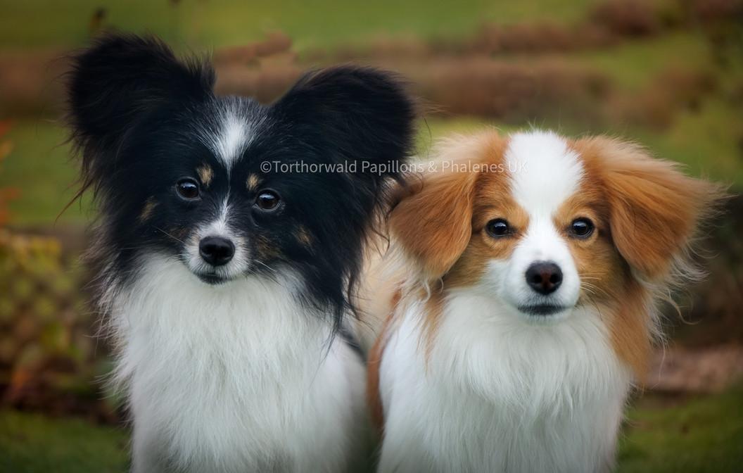 Pippin & Hunter