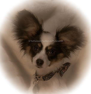 Puppy Bambi.jpg