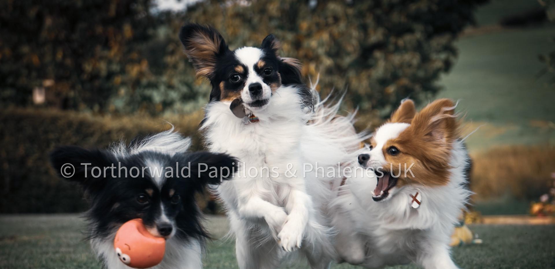 Pippin, Bambi & Hunter