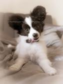 Puppy Mino.jpg