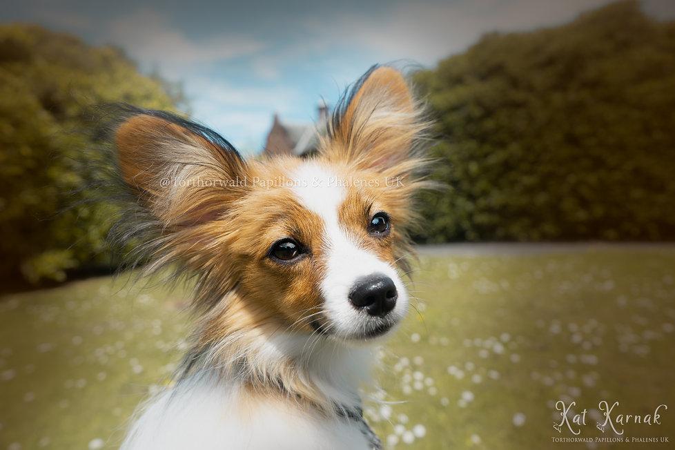 Irwin Puppy
