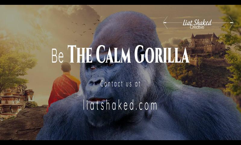 The Calm Gorilla