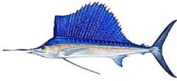 Darwin fishing charters for sailfish at Dundee Beach fishing charters Australia