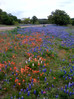 Texas Wildflowers 2014