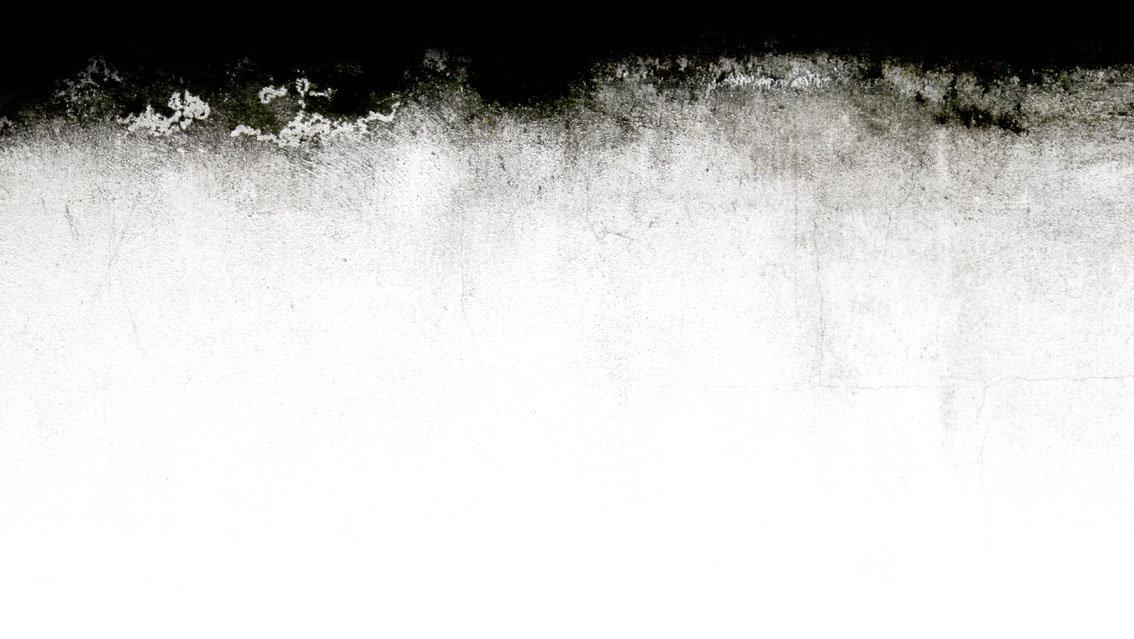 muro bianco con muffa