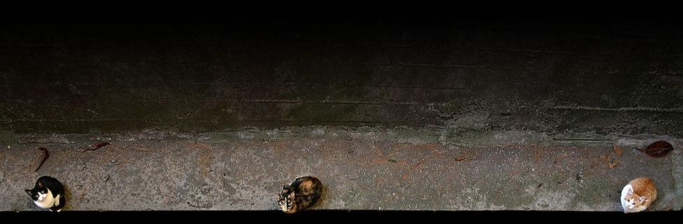tre gatti allineati sopra un muro di cemento