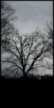 sole nero, sagoma di albero, controluce, cerchio