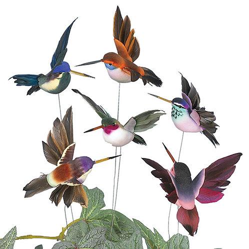 Pick Humming Bird