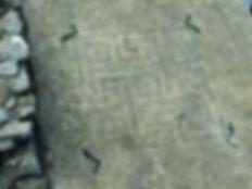 La célèbre mosaïque aux dauphins,oeuvre Romaine trouvée à Ucetia