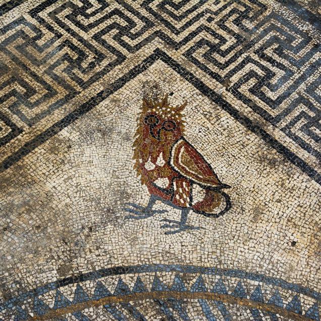 Owl or beggar Mosaic in Ucetia