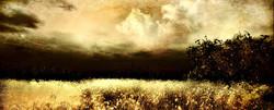 colour fields sarawak