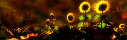 sunworshipers