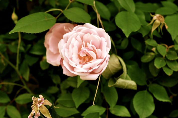 ProvenceFlower.jpg