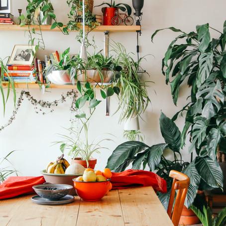 Hoe kamerplanten organiseren?