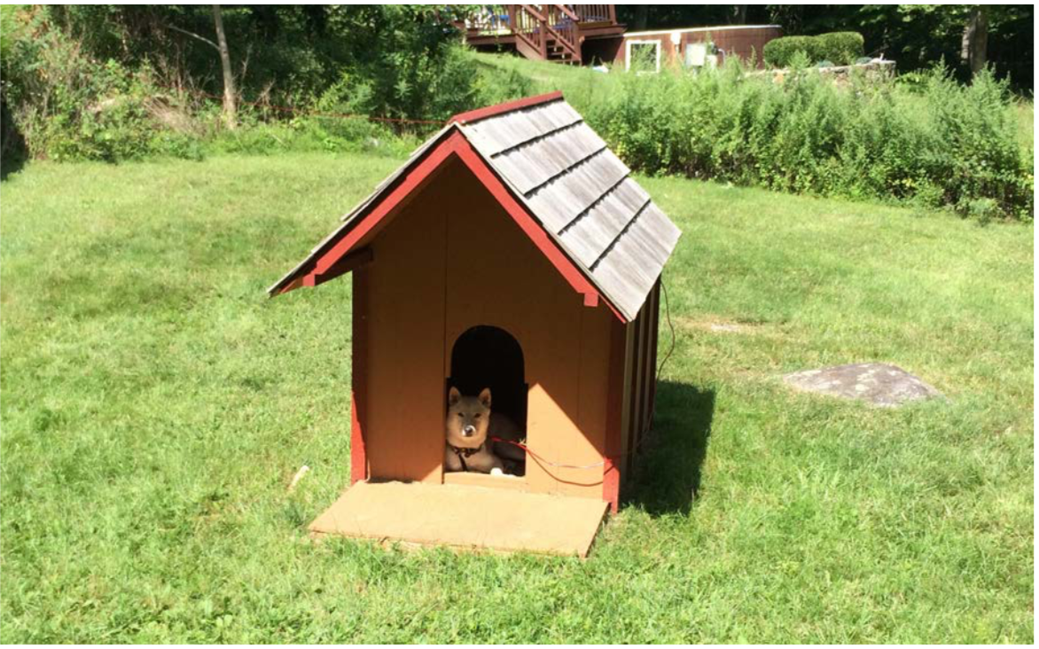 Doghouse with Cute Dog