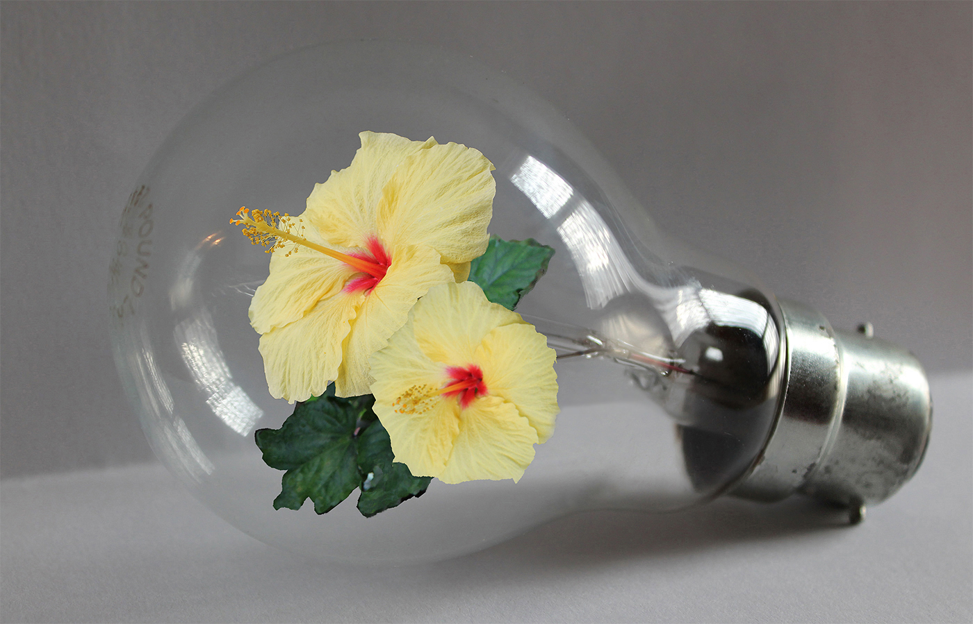 Bulb In Bloom