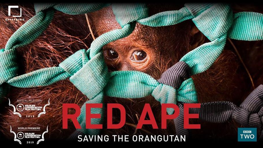 Red Ape.jpg