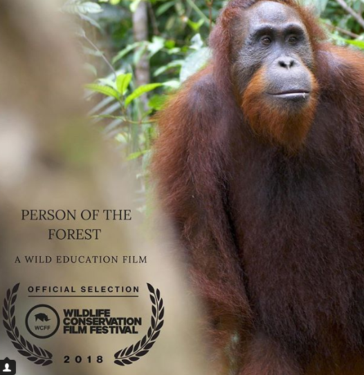 Person of the forest.png