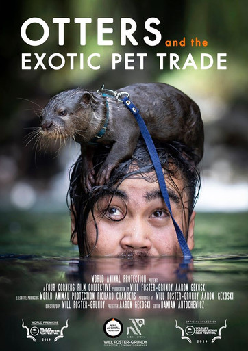Otters and the Exotic Pet Trade.jpg