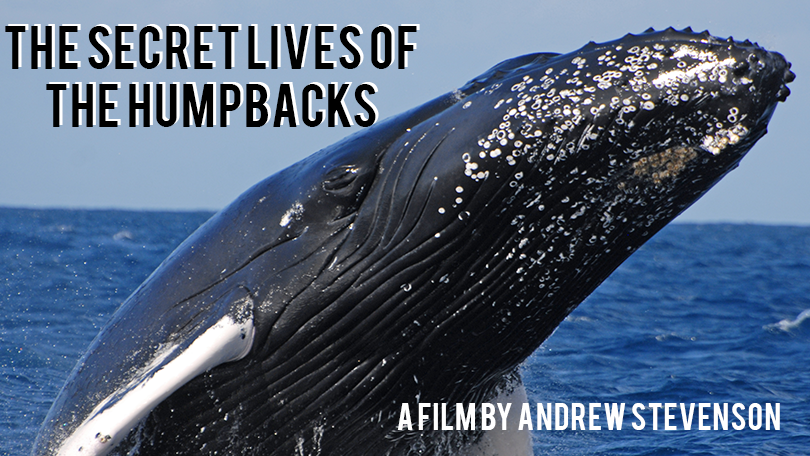 The Secret Lives of Humpbacks.png
