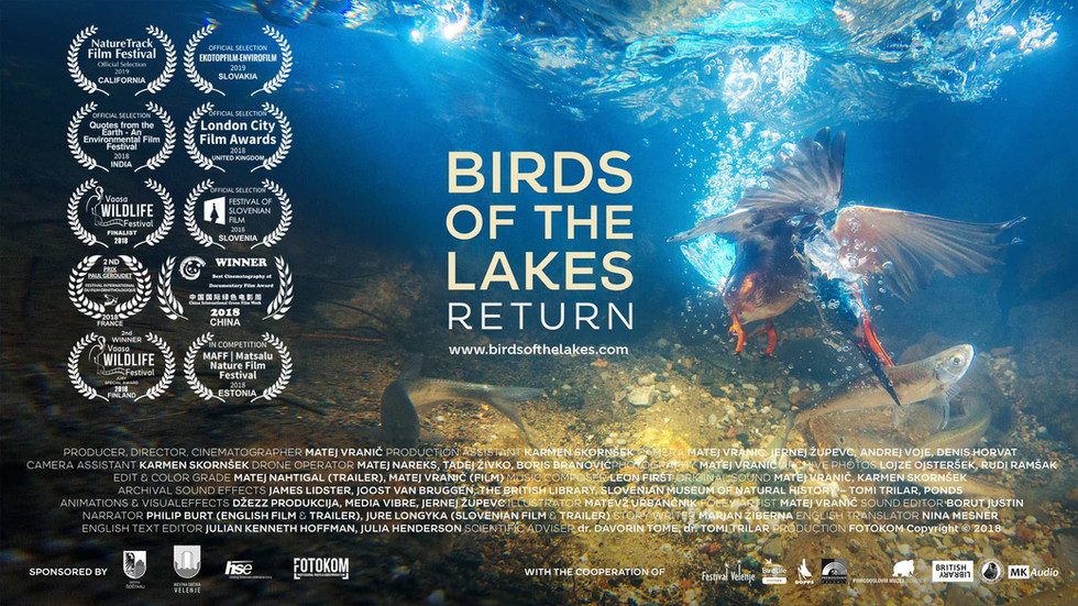 Birds of the lakes return.jpg