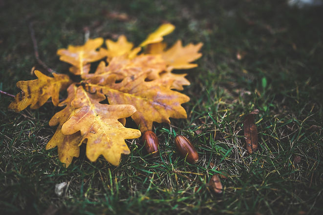 oak-leaves-and-acorns-6207.jpg