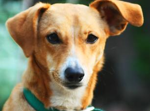 Rescue pets bij Huisdieren