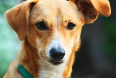 """Dangerous"" Dogs: Bones Stacked Against Them"