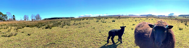 panorama_edited_edited_edited.jpg