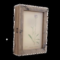 植物図手採色のアンティークペーパー