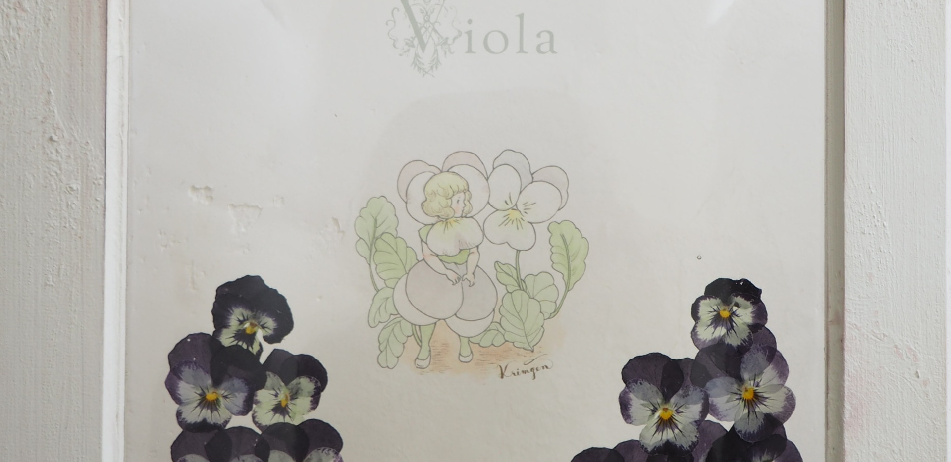 WI-06 ビオラ