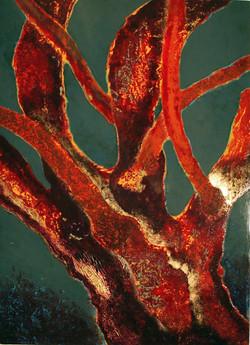 Bois corail - Chêne