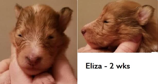Eliza_wk2.jpg