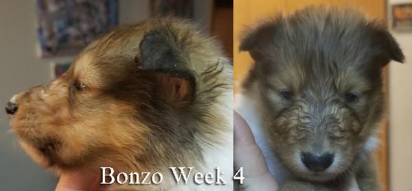 Bonzo Wk 4.jpg