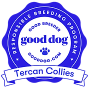 tercan-collies-badge.png