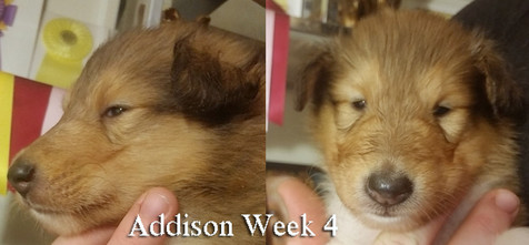 Addison Wk 4.jpg