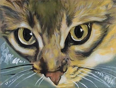 Quite Intensely Tabby (9x12) oil on canv