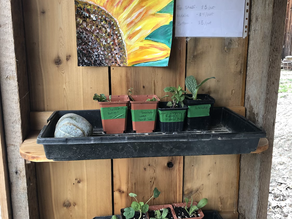 Farmacy is open! Plant starts available!